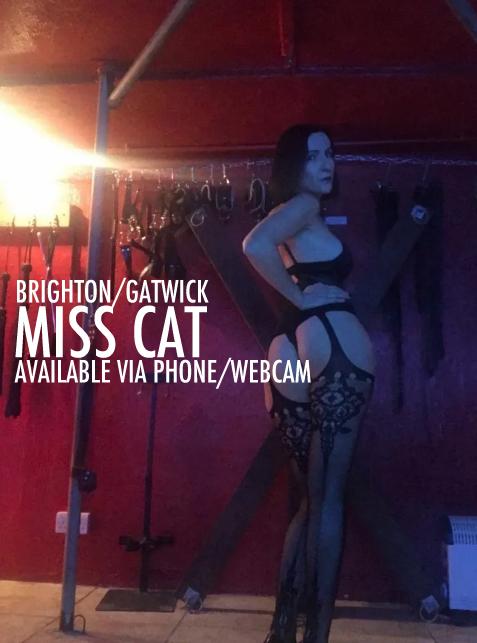 brighton mistress cat